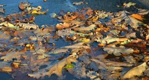 Осенний вернисаж. Часть 2. Как попасть в будущее?