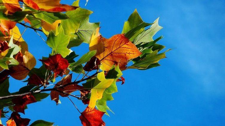 Осенний вернисаж. Часть 3. Как вернуться домой?