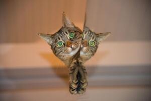 Поддаются ли кошки дрессировке в домашних условиях?