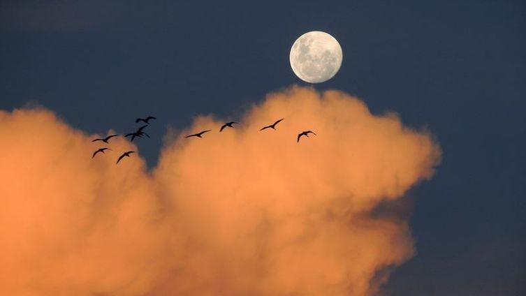 Янтарная вуаль. Что надевает Луна в полнолуние?