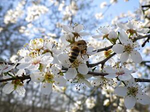 Из жизни пчел. Что можно приготовить из меда?