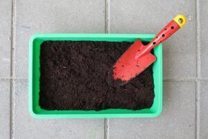 Дачная пора: что делать в саду и огороде ранней весной?