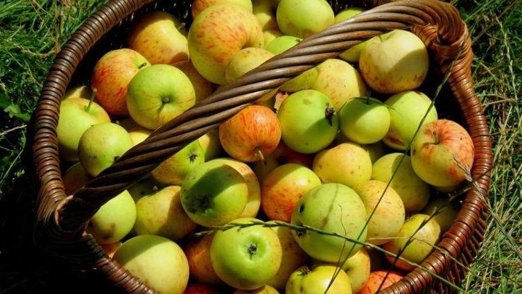 На что годятся гнилые яблоки?