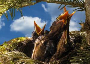 Чем интересны гнёзда птиц?