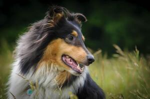 Мой герой, или Обладают ли собаки интеллектом?