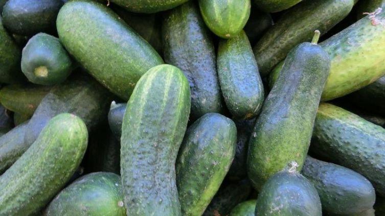 Почему огурец - доктор, или Как познакомить детей с миром овощей?