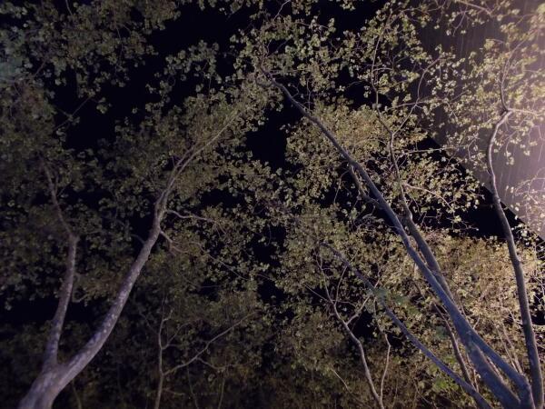 Кроны деревьев ночной Барселоны