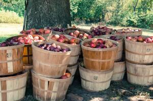 Как использовать яблочный уксус в косметологии?