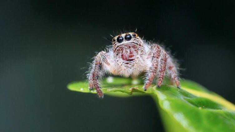 Народные приметы. Почему убить паука считается плохой приметой?