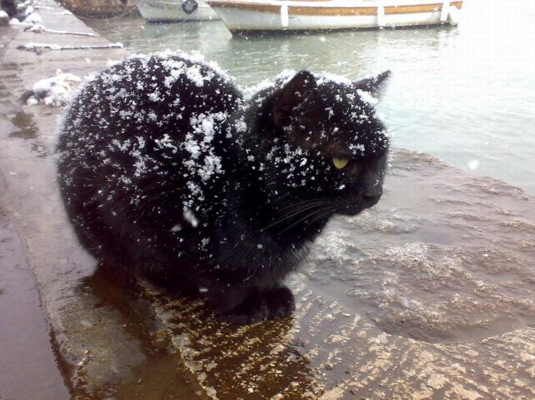 Почему не повезло чёрному коту?