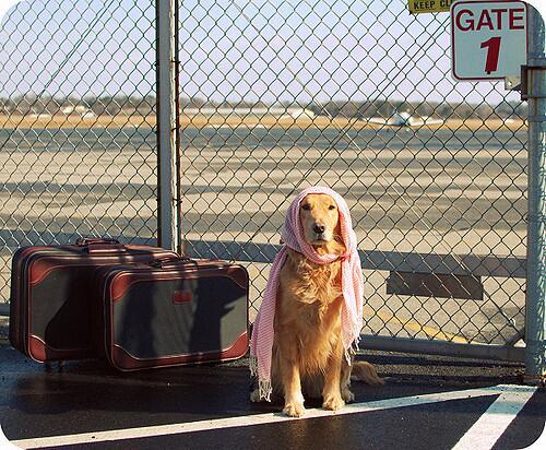 Как не переплатить за багаж в самолете?