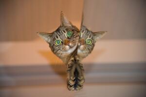 Правда ли, что у кошки девять жизней?