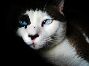 Зачем человек приручил кошку?