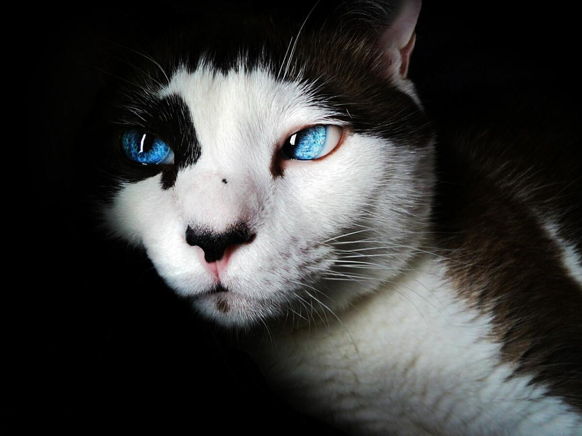 Человек приручил кота