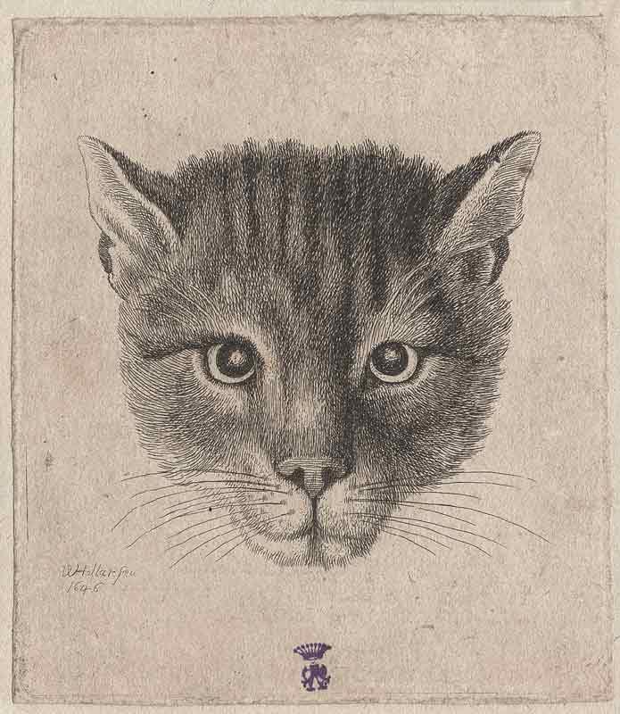 Любимый кот царя Алексея Михайловича.