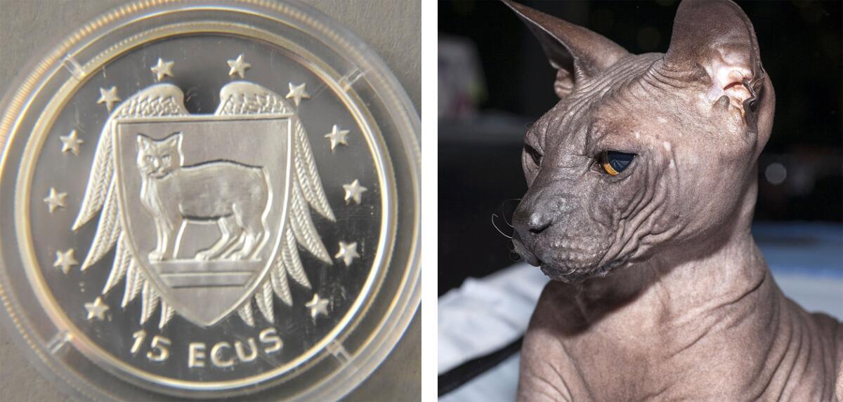 Слева - бесхвостый кот на памятной манете о-ва Мэн 1994 г.; справа - донской сфинкс.