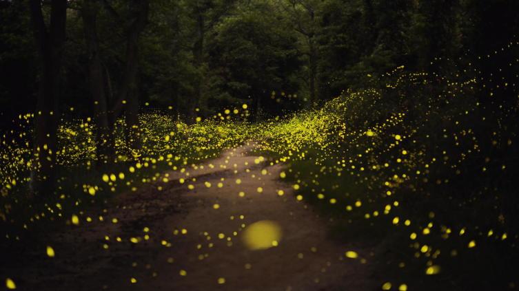 Волшебные леса в Японии