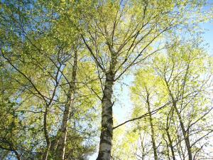 Как отдыхают деревья?
