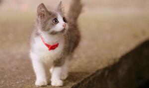Как кошки вновь завоевали популярность?