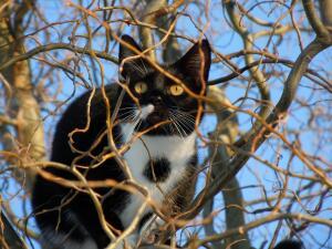 Символом чего могут выступать коты и кошки?