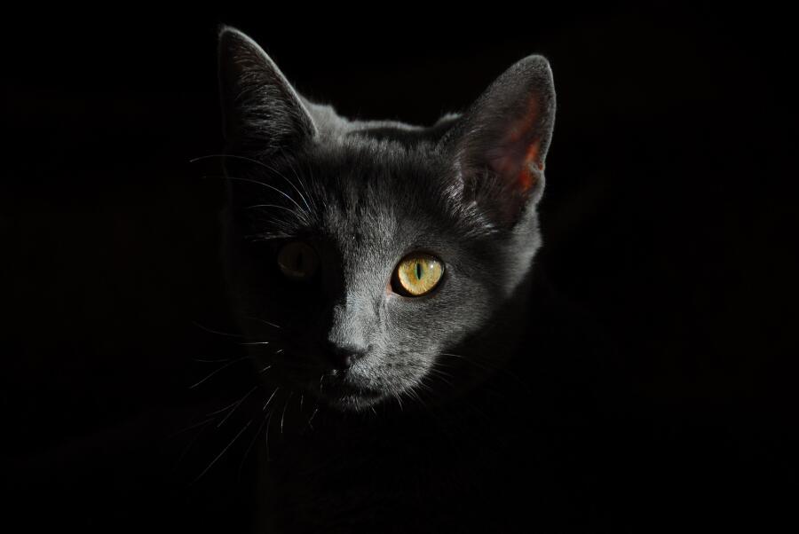 Легко ли найти чёрную кошку у... Конфуция?