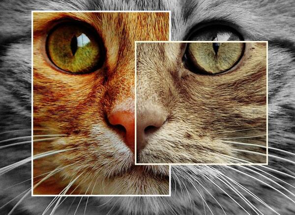 Как коты снимались в кино, пели и сидели в коробке у Шрёдингера?
