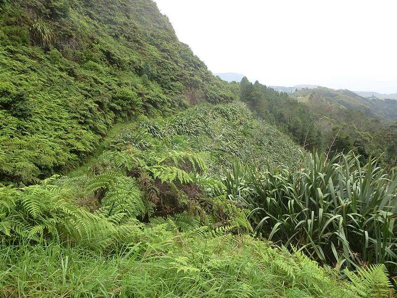 Тропа на пик Дианы в окружении папоротников и льна. Национальный парк на острове Святой Елены