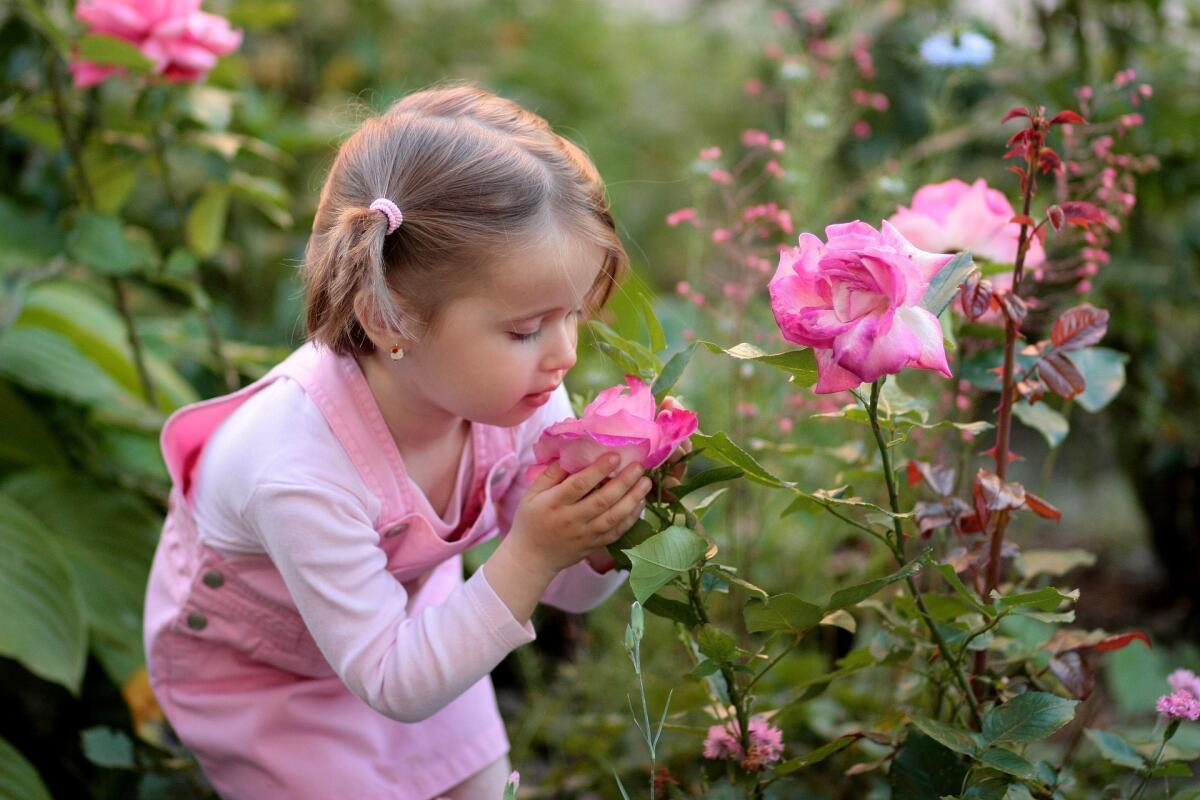 Картинка нюхает цветы