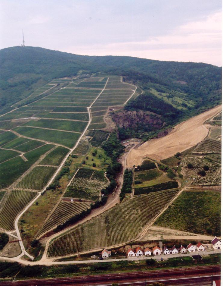 Виноградники на склонах горы Токай