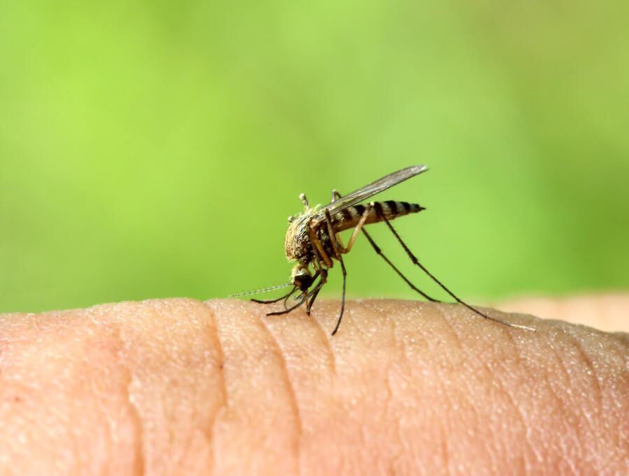 Как спастись от комаров народными средствами?