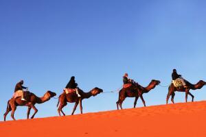 Как ходят караваны через Сахару?
