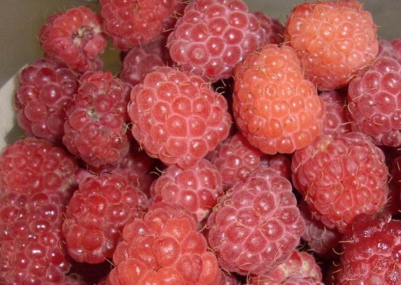 Если хотите сохранить вкус и аромат свежей малины, варите пятиминутку
