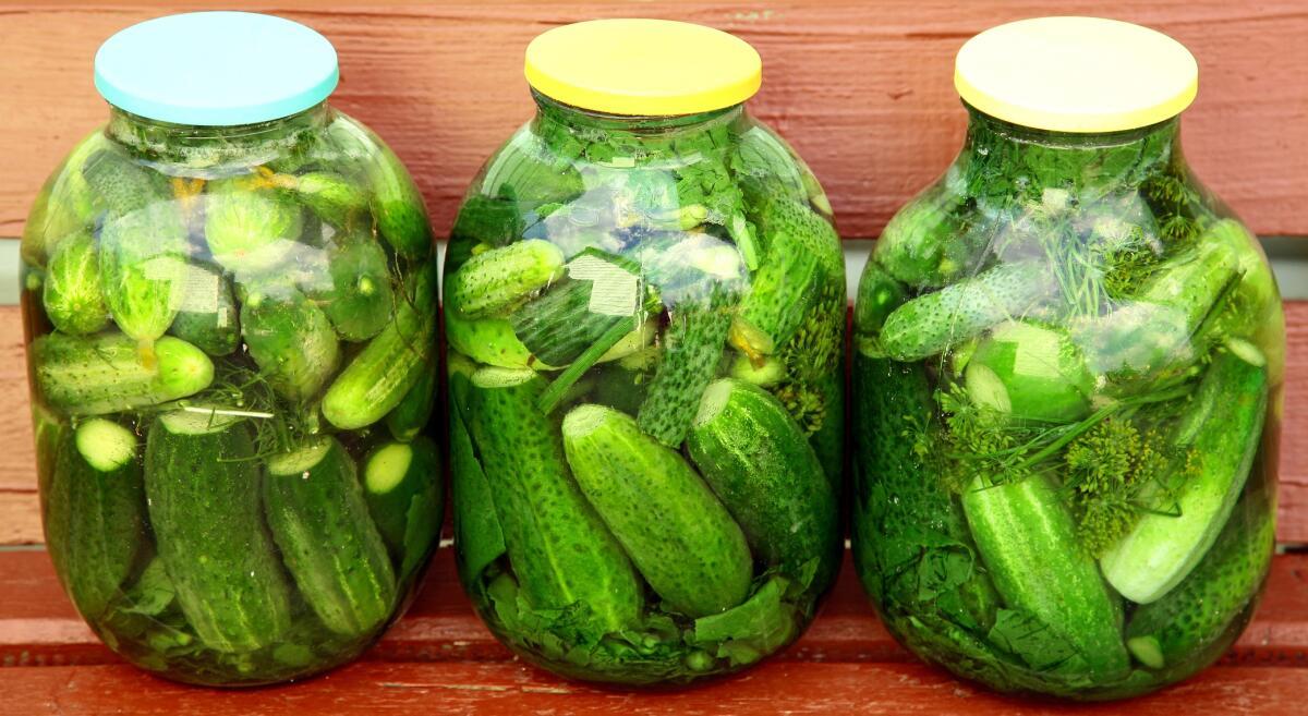 Малосольные огурцы - рецепты: Как быстро приготовить 89