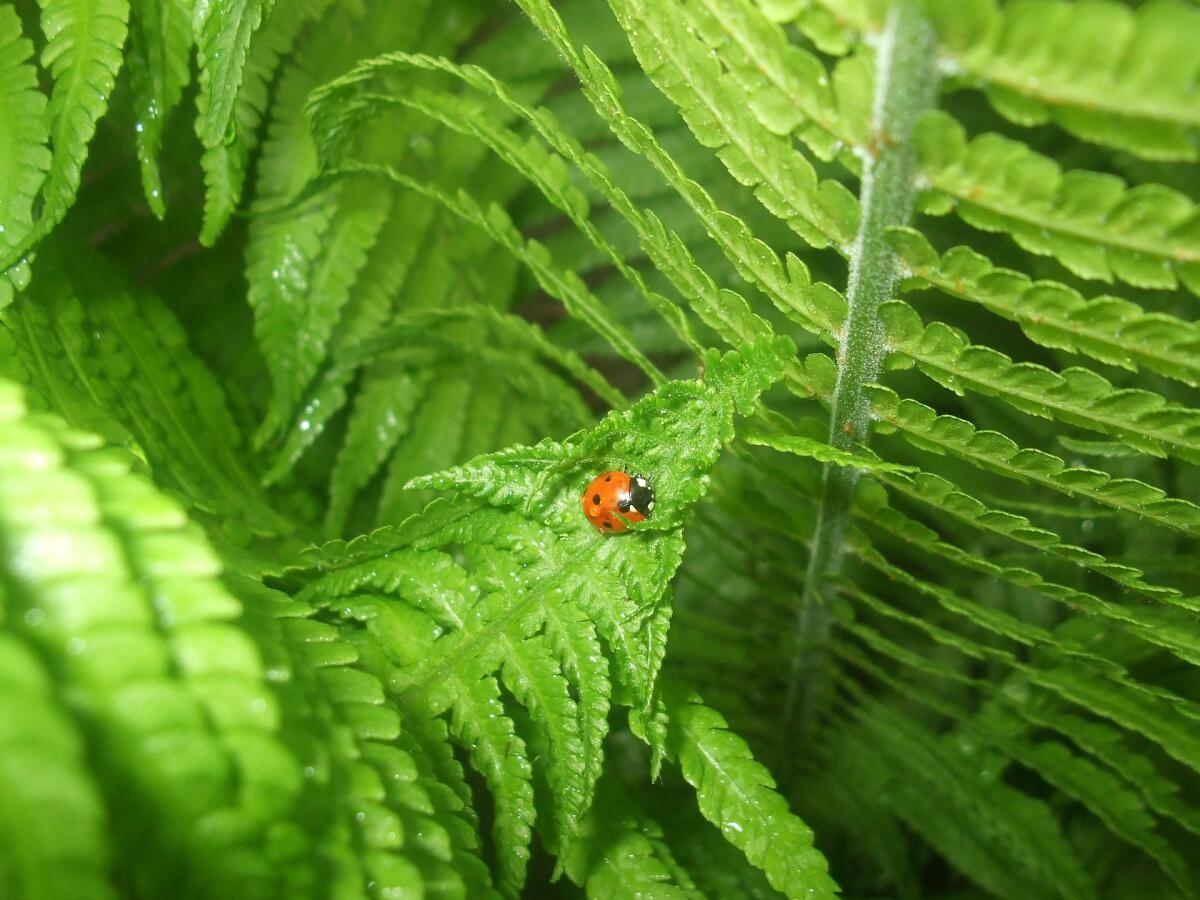 На земле около 300 родов и около 20000 видов папоротника
