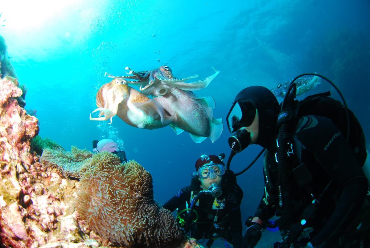 Незнакомые предметы, находящиеся под водой, не нужно трогать руками, так как это может быть замаскировавшийся подводный обитатель