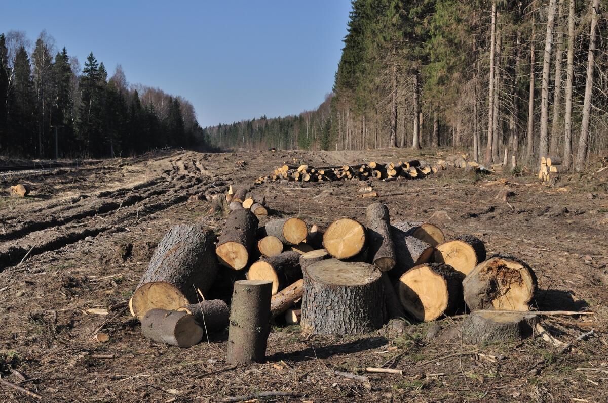 ...да и лес стали буквально изводить... ,просека, Владимировская область