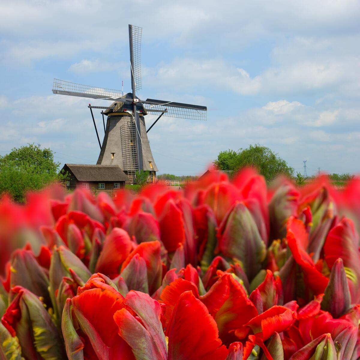 Ветряная мельница, Голландия