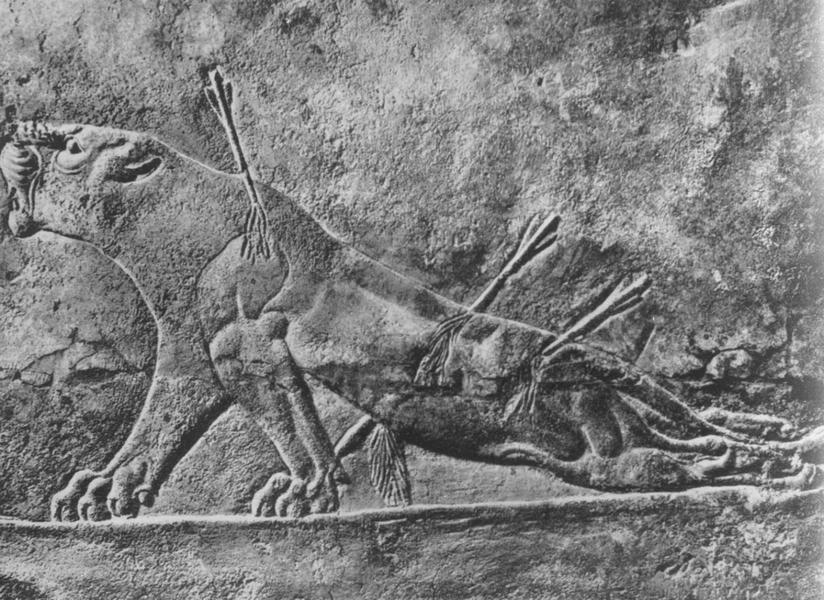 Ассирийское изображение раненой львицы