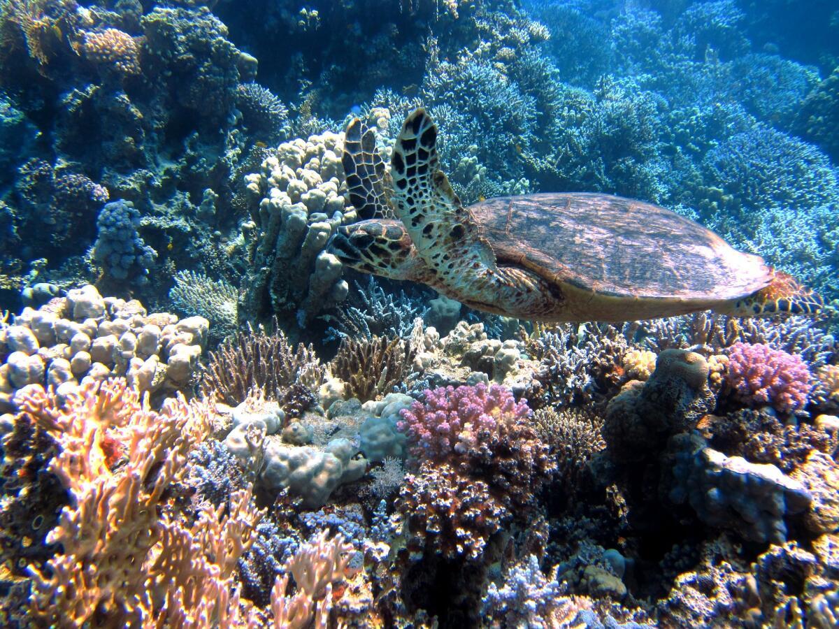 Подводные красоты Красного моря
