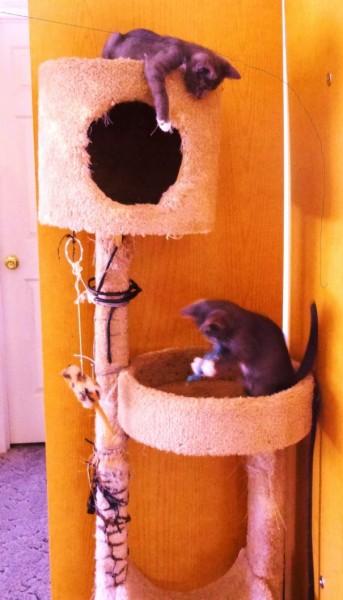 Хорошо поиграть с братом на кошачьем дереве