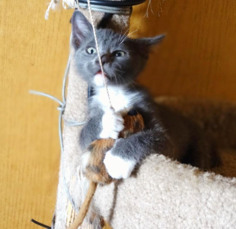 Шед играет с мышкой