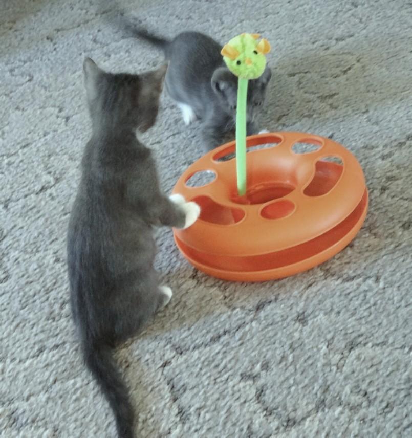 Кибер-игрушка для котят