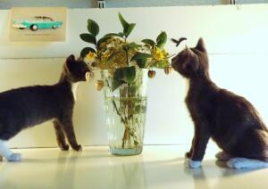 Двое из ларца – одинаковы с лица. Что научились делать котята-близнецы за 3 месяца жизни?