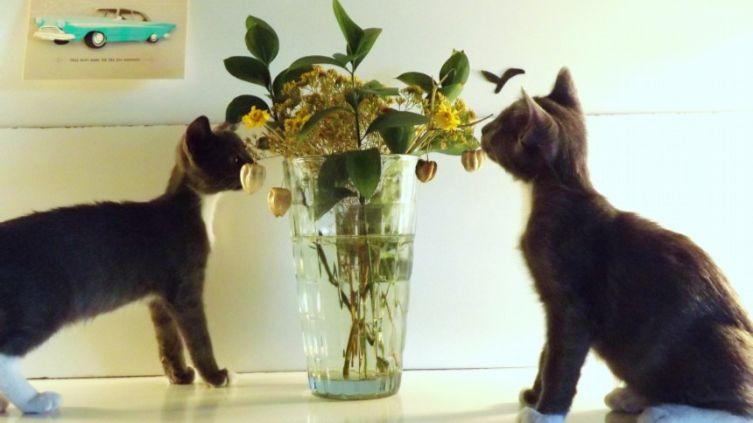 Котята-эстеты