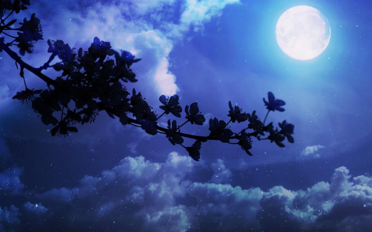 Лунный цикл — 29,5 суток, хороший ориентир во времени