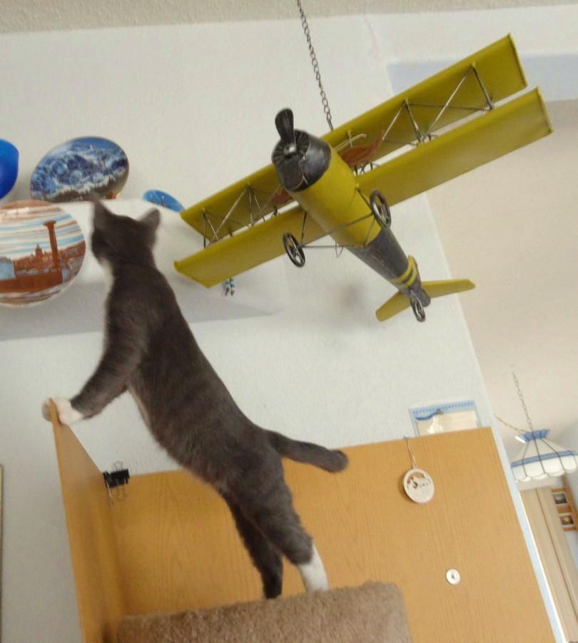 Шед мечтает стать лётчиком