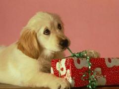 Хороший ученик быстро запомнит, что такое подарок...