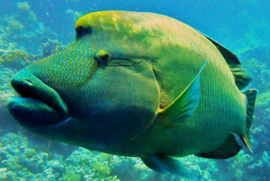 Какая рыба носит имя императора?