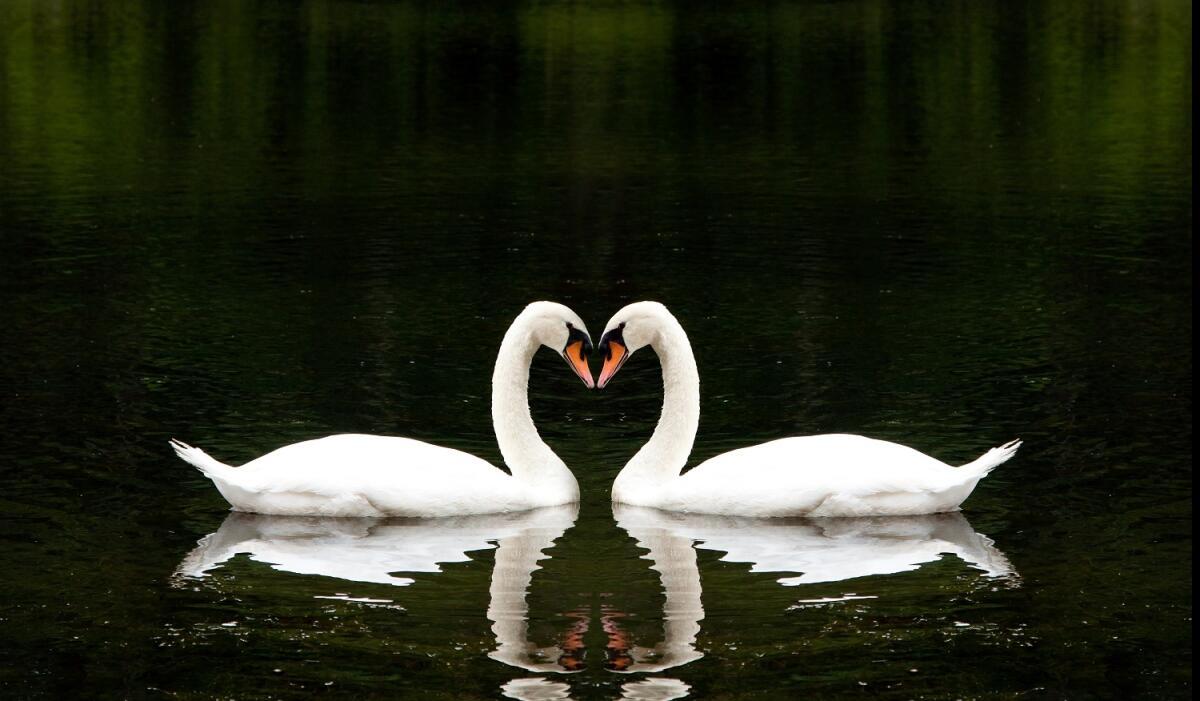 В Англии огромные популяции диких птиц