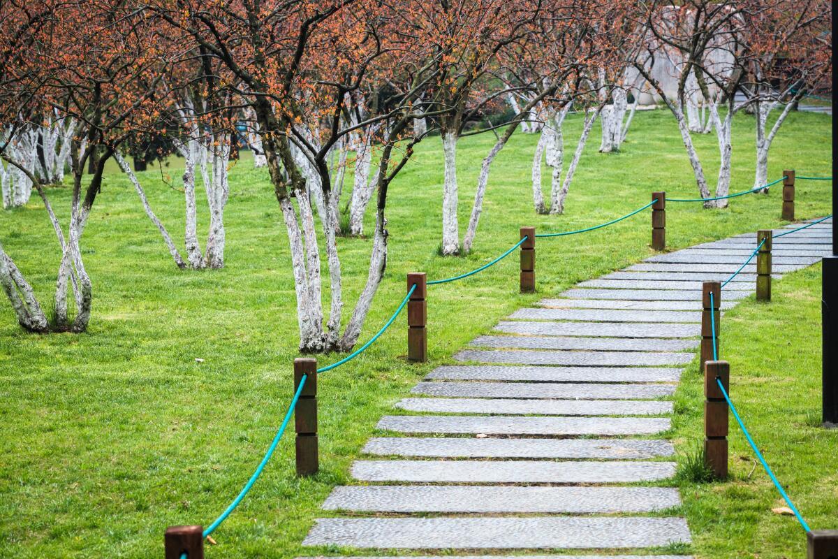 Успешное озеленение городов невозможно без привлечения специалистов - дендрологов